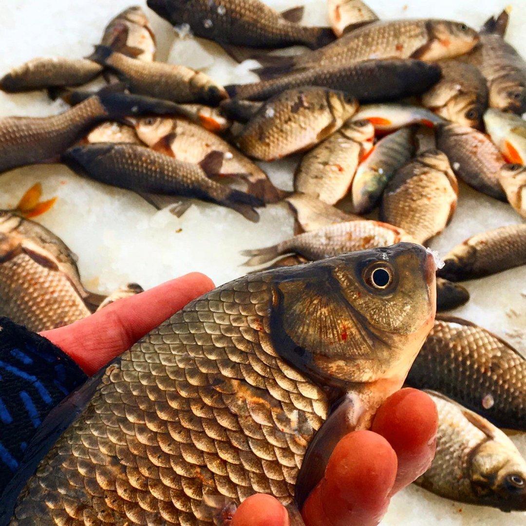 наша рыбалка фото разновид рыб такое патроны дисперсант