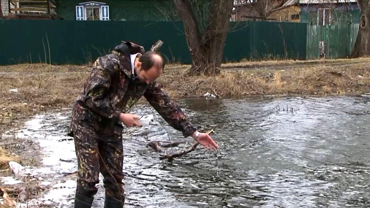 Эксперты предположили, почему на озере в Барнауле массово всплыла мёртвая рыба