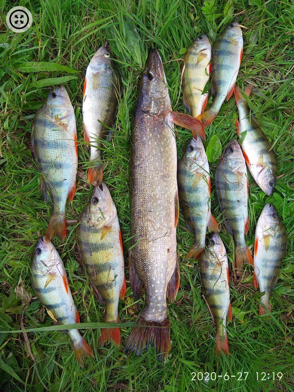 Гигантские карпы и маленькие подлещики: подборка улова алтайских рыбаков