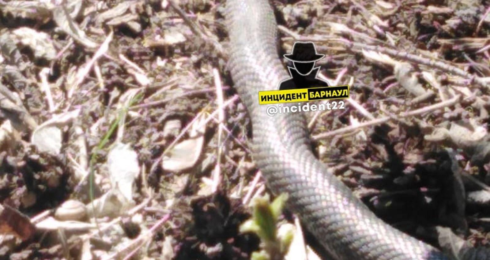 В Алтайском крае начали просыпаться змеи
